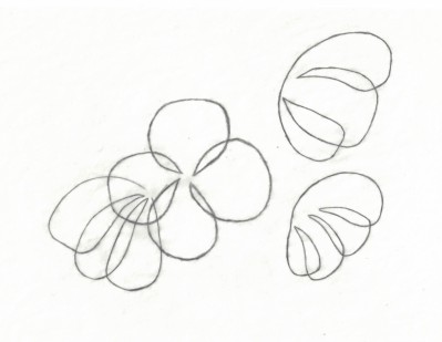 Flowers Study, Not yet opened (2)