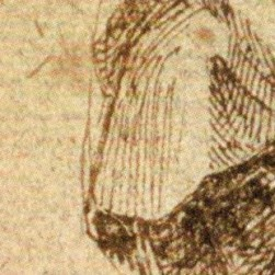 Study of a Woman in Moruning, multiple straight lines (2)