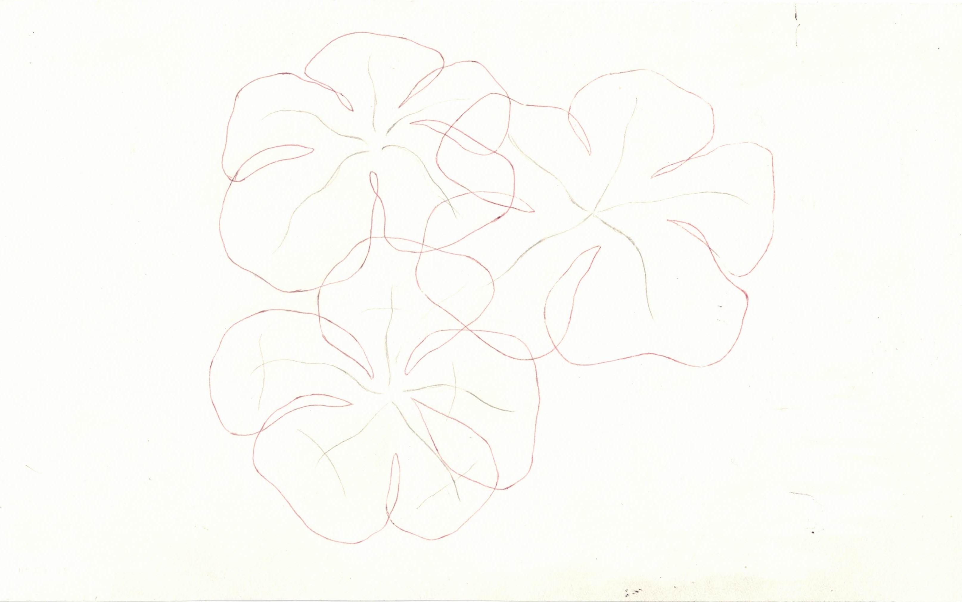 flowers ii, edit i, wilted study (1)