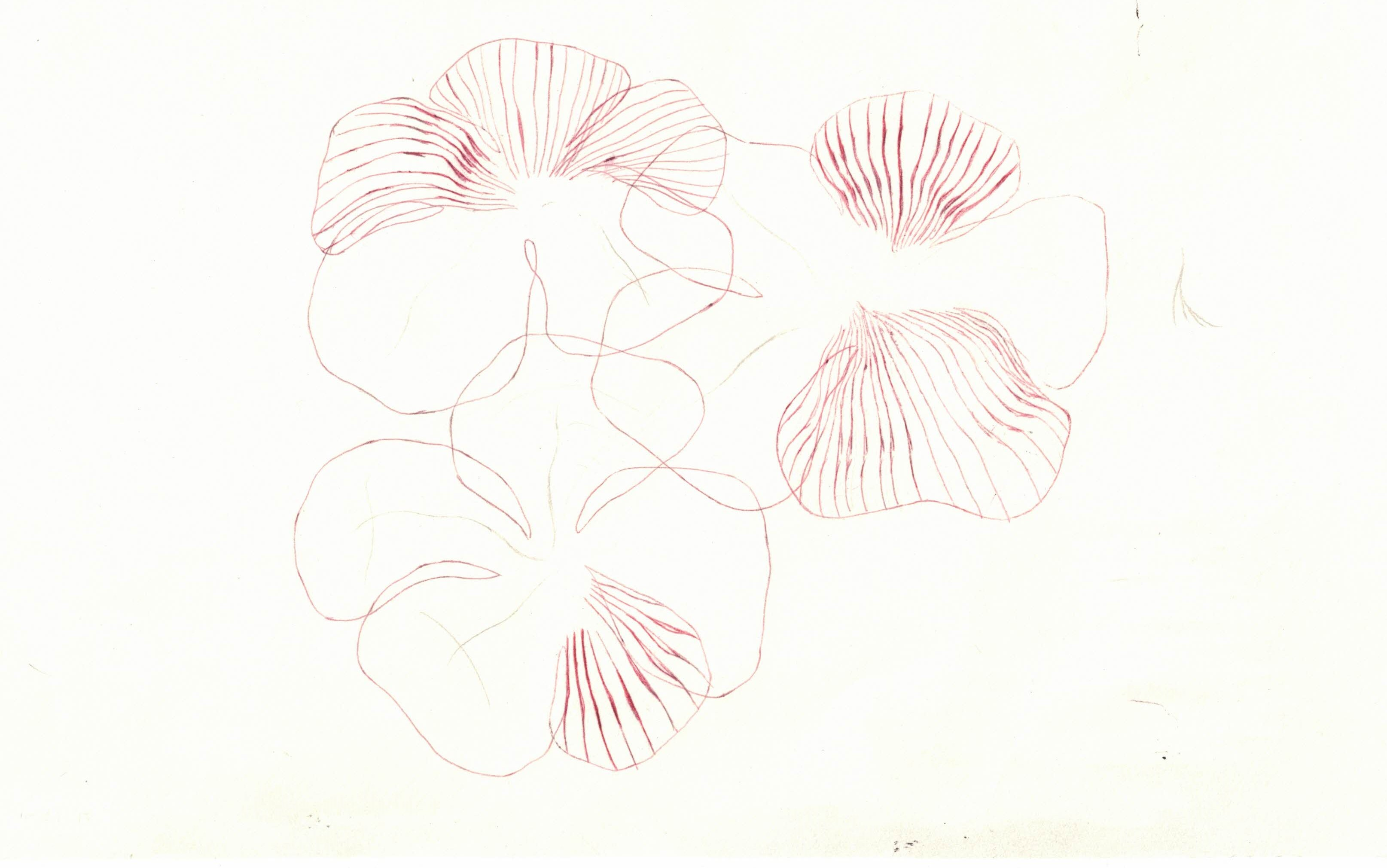 flowers ii, edit i, wilted study (3)