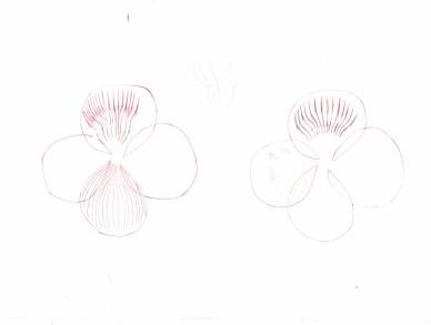 flowers study, opened (1)