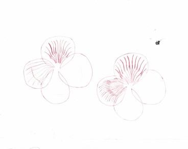 flowers study, opened (2)
