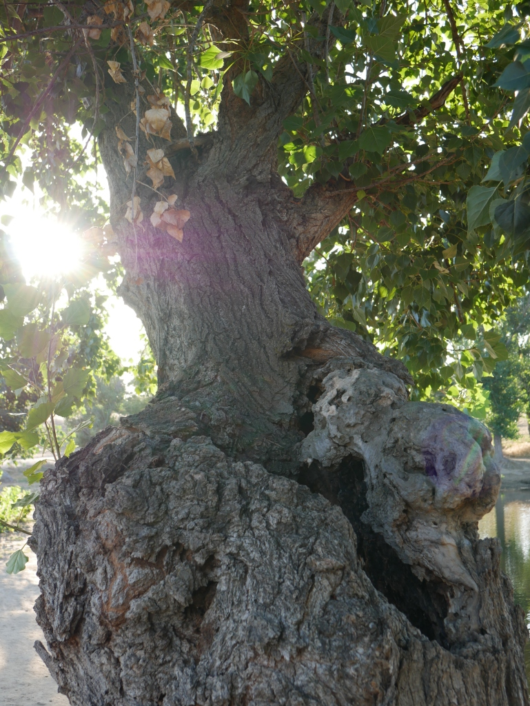Gaa Wai 062019 Tree 4