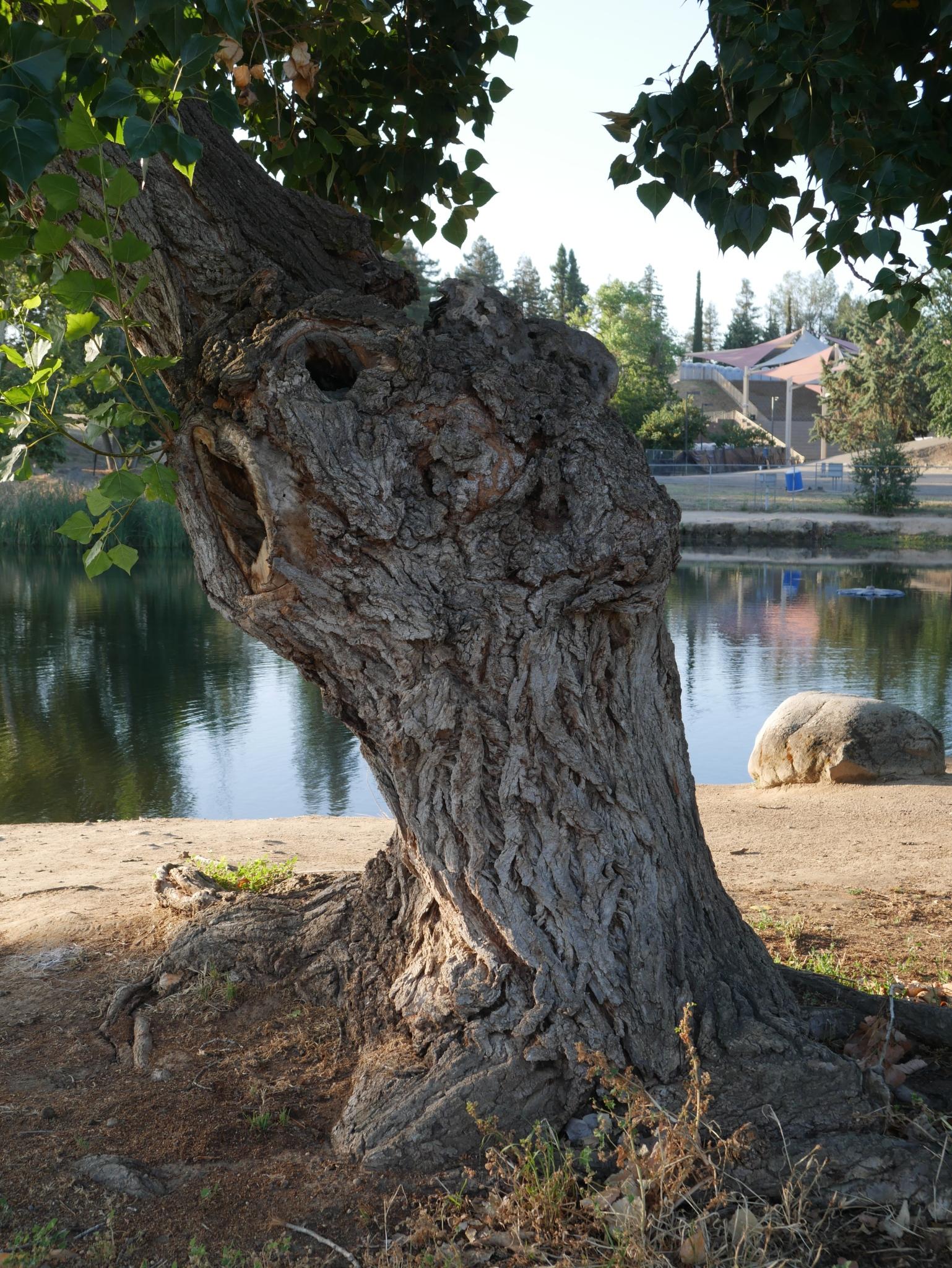 Gaa Wai 062119 Tree 1